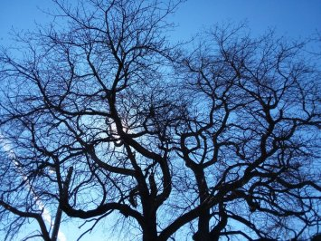 brooding_tree