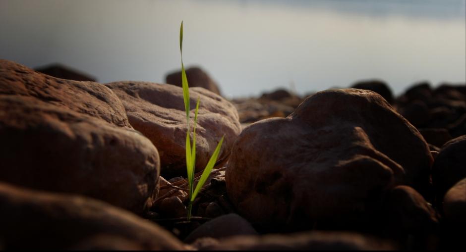 The_persistent_crawl